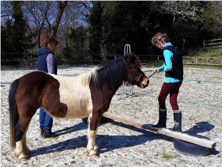 Médiation équine et thérapie avec le cheval